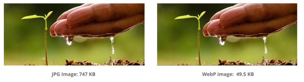 side-by-side comparison of an image of hands cupping water next to a plant. The images look almost exactly the same, yet the WebP image is 15 times lighter!